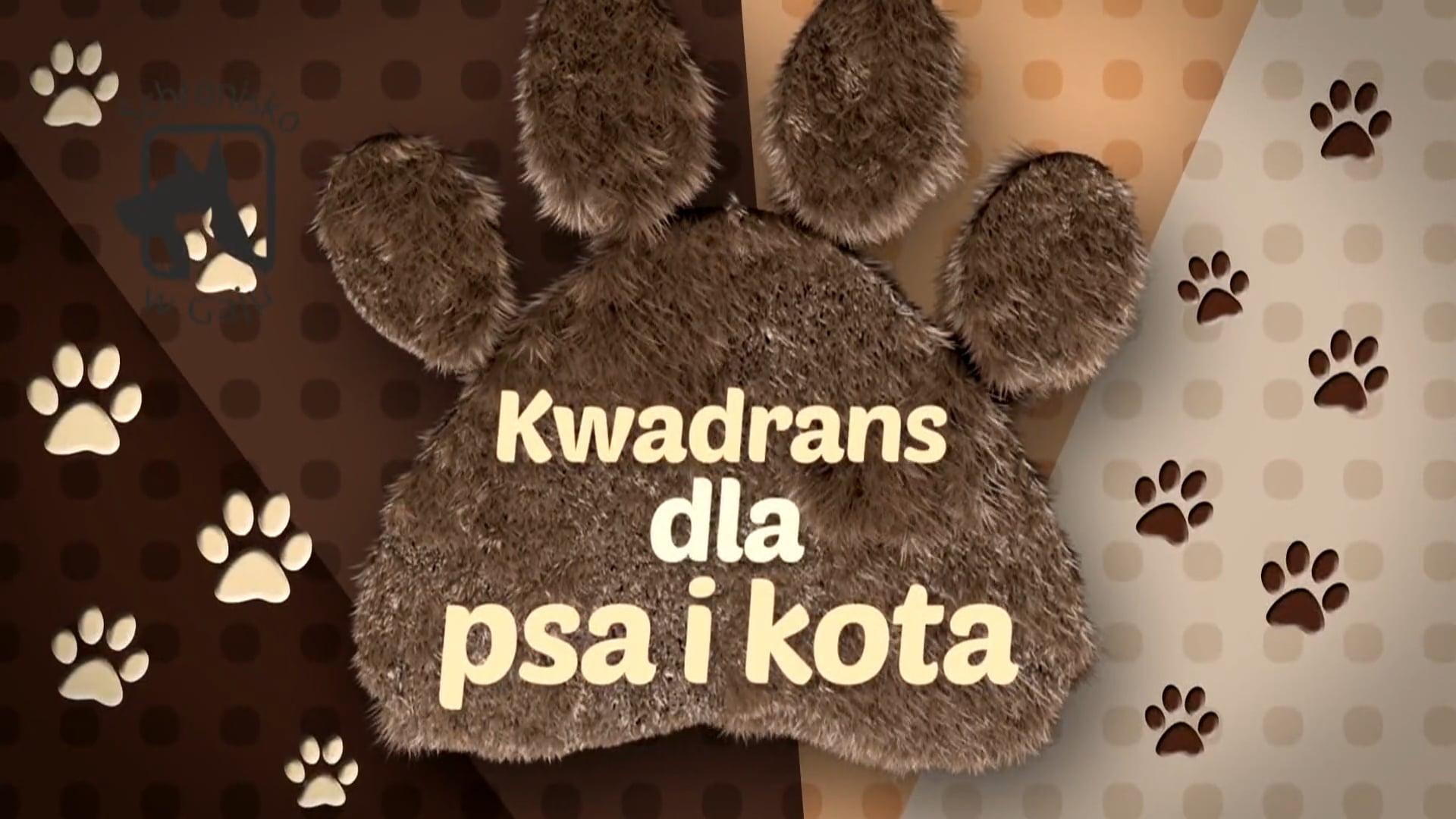 Kwadrans dla psa i kota – odc. 2