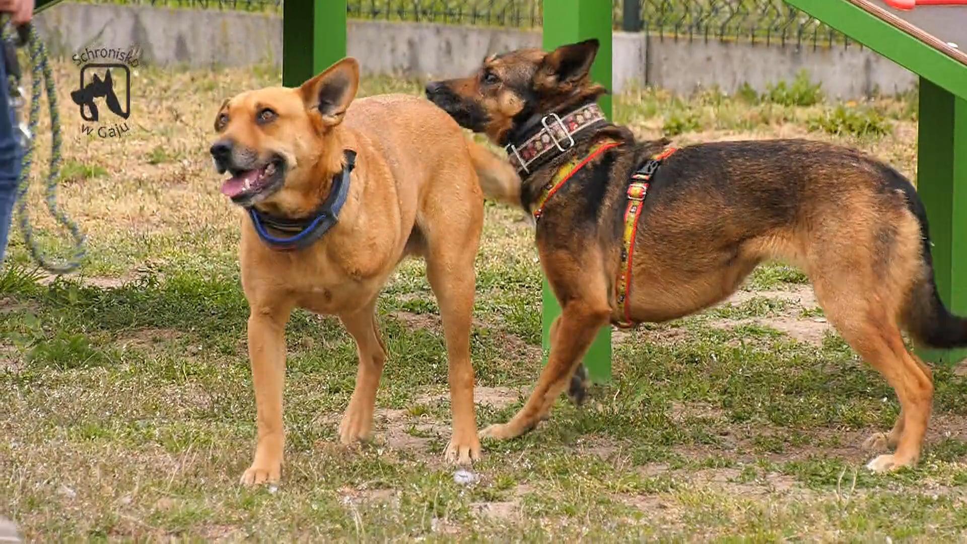 Kwadrans dla psa i kota – odc. 3